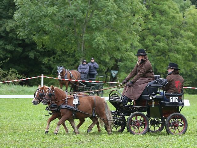 Fahrwettbewerb - Zweispänner Pony