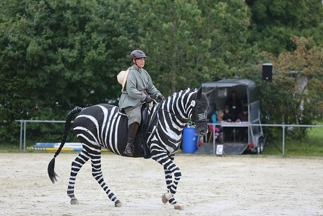Einzelkür ... in Blaubeuren ist das Zebra los ...