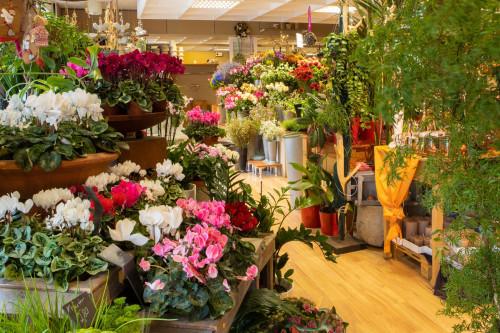 HP Birgits Blumenb. Dauerblumen