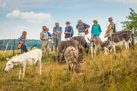 Esel-Beweidungsprojekt